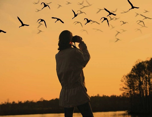 watching birds using binoculars